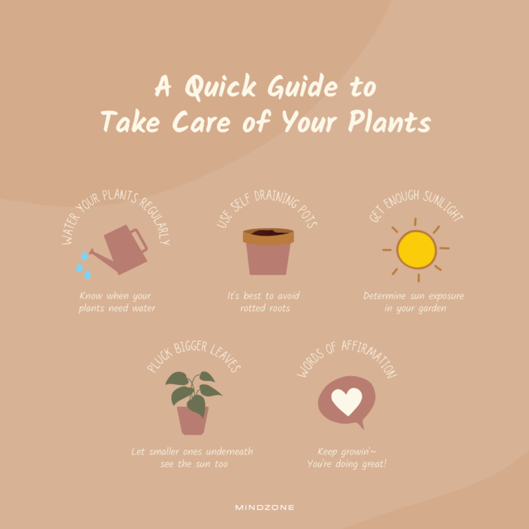 a quick guide to take care if your plants